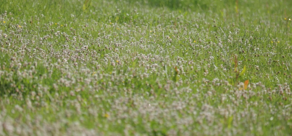 clover-field-banner