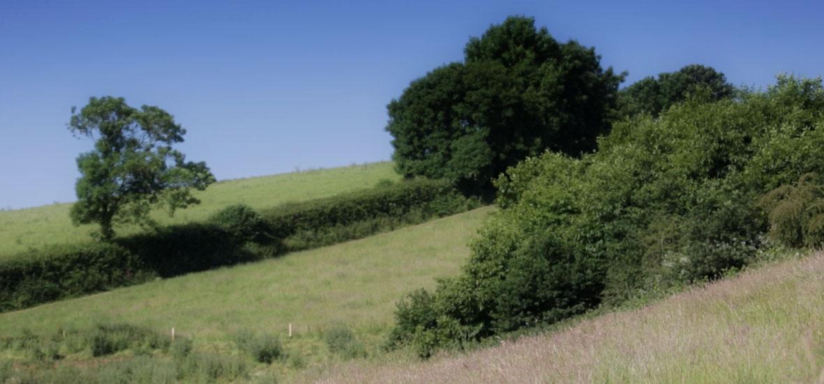 fieldsandtrees